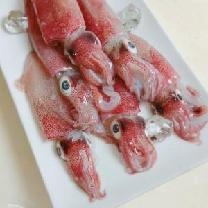 冰原鮮魚急凍八斗子鮮凍小卷